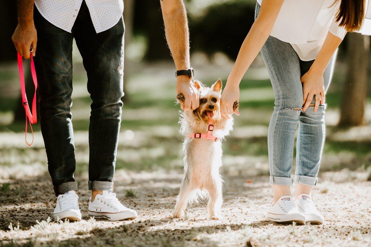 Fotografía de mascotas con un yorkshide